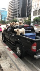 Dogs on Truck